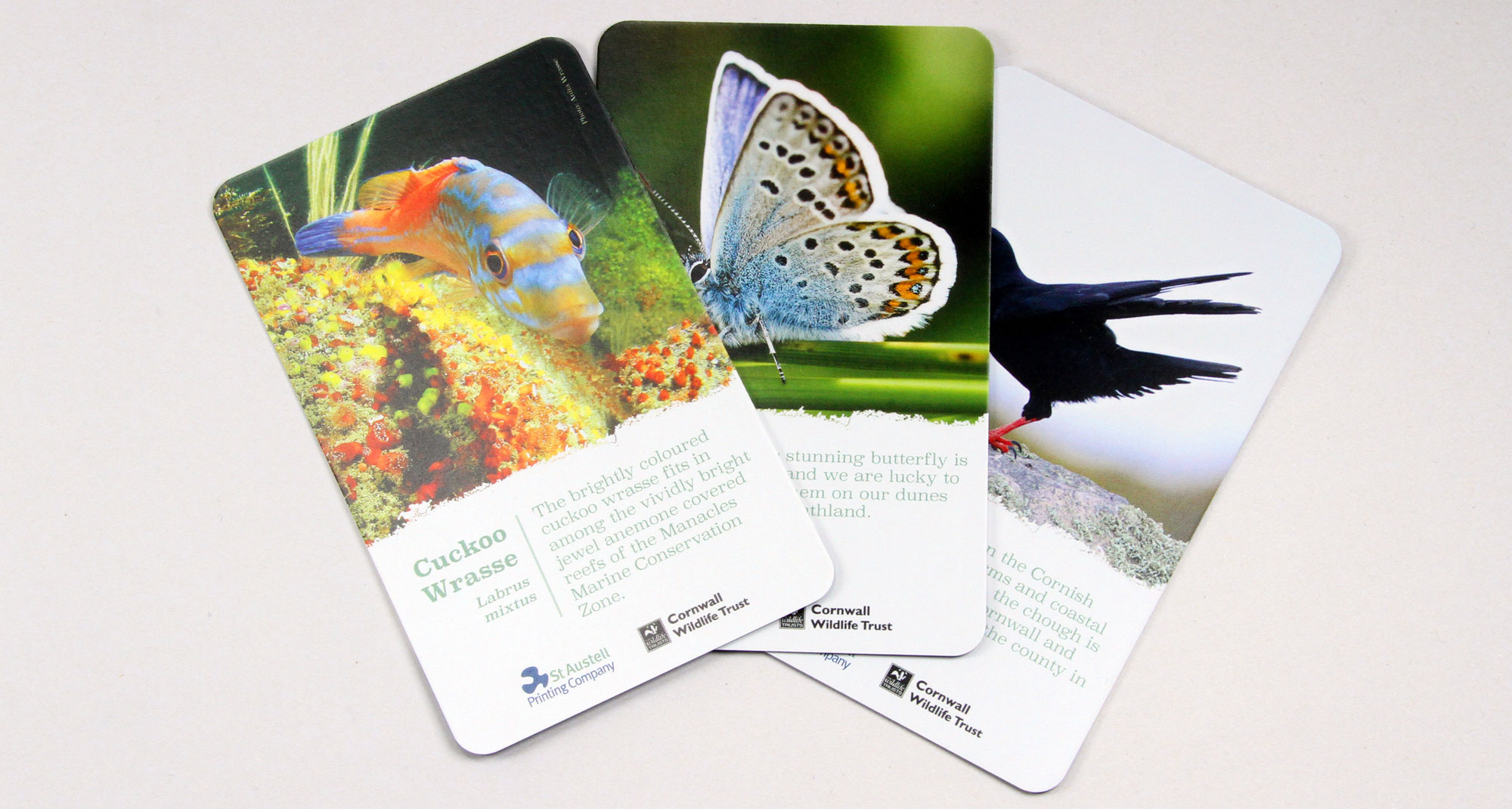 Cornwall Wildlife Trust Card Game